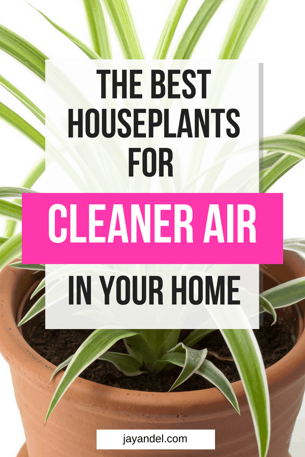 These are some awesome plants you need in your home for cleaner air.
