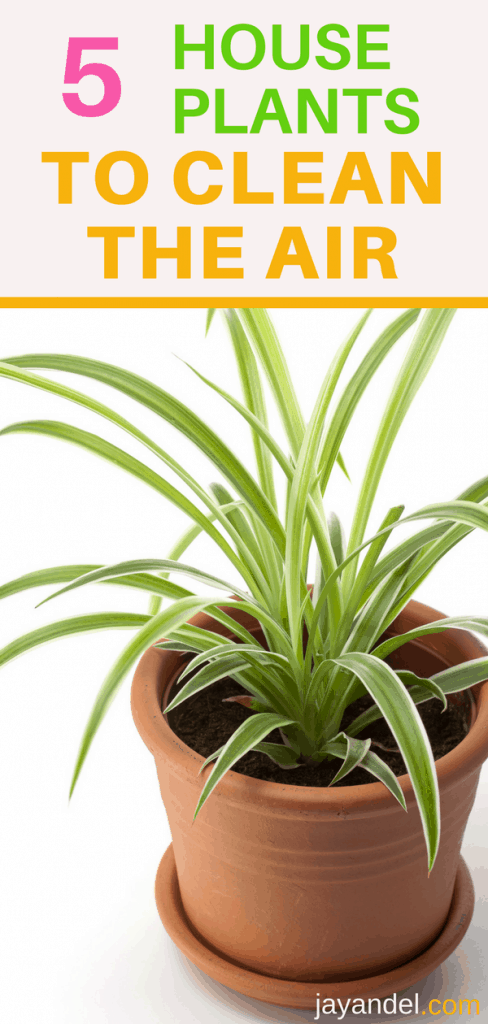 5 houseplants for cleaner air inside the home