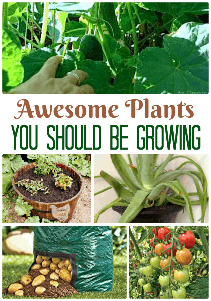 Awesome plants you should be growing