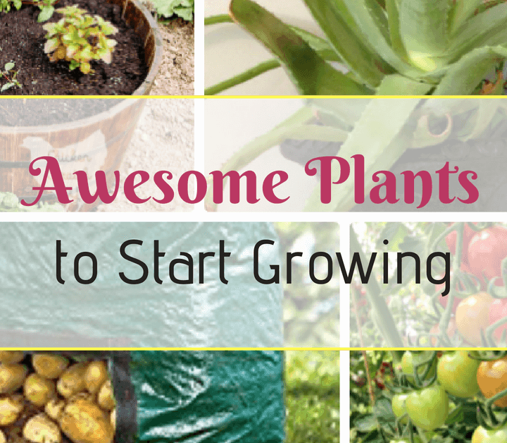 awesome plants to start growing
