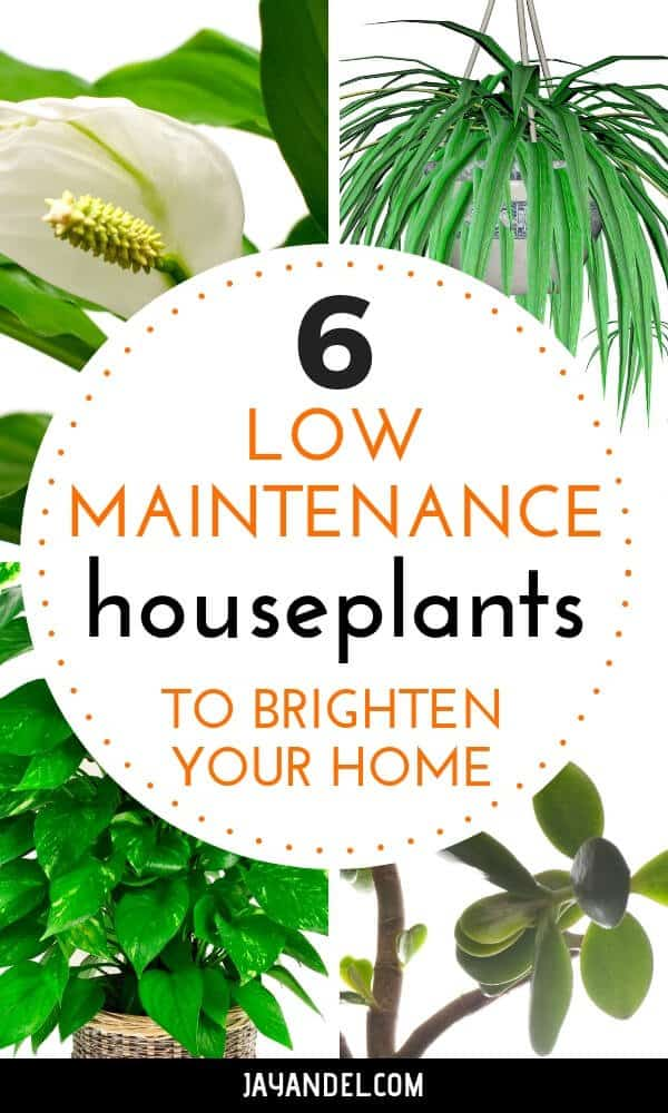 low maintenance houseplants to brighten your home
