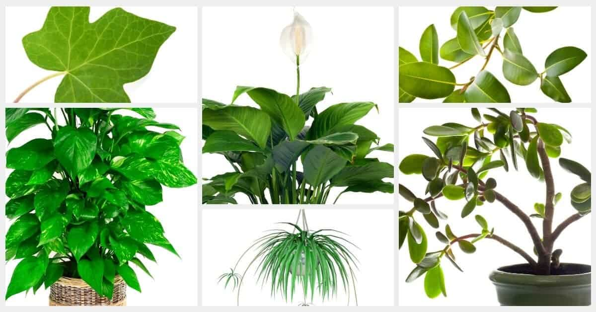 low maintenance houseplants winter