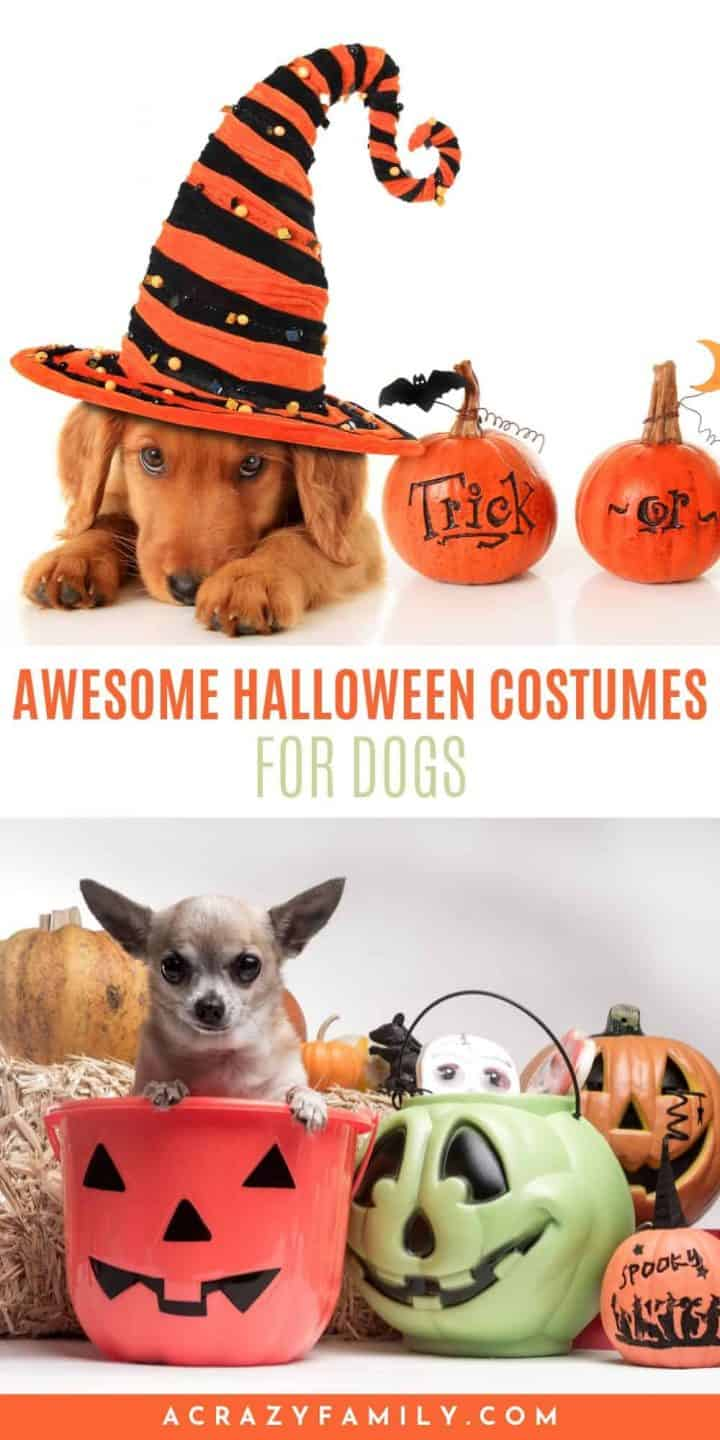 Insanely Awesome Halloween Costumes For Dogs