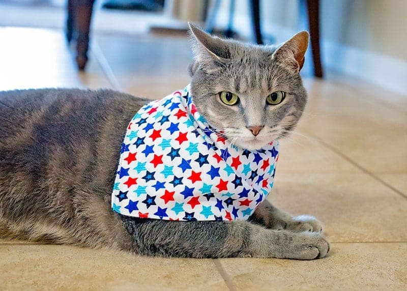 diy cat kerchief to make and sell