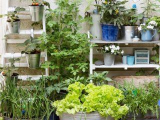How to Create a Patio Vegetable Garden